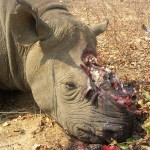 Credit Lowveld Rhino Trust with kind permission for use from Save the Rhino International