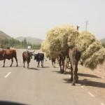 More Ethiopian Road