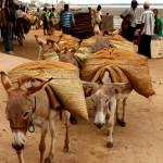 Lamu Donkeys