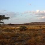 Turkana Landscape
