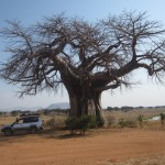 Beast Vs Baobab