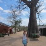 Jules Baobab